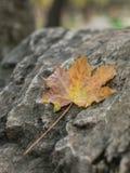 Желтая осень Стоковая Фотография RF