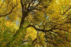 Желтая осень Стоковое фото RF