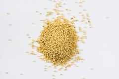 Желтая предпосылка гроутов пшена Стоковое Изображение RF