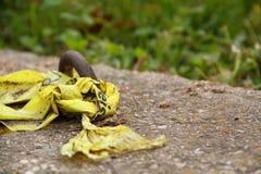 Желтая предпосылка зеленого цвета предупреждающей ленты Стоковое Изображение RF