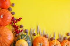 Желтая предпосылка осени Фестиваль сбора осени Стоковая Фотография RF