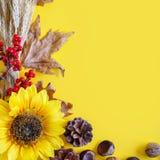 Желтая предпосылка осени Фестиваль сбора осени Стоковые Изображения RF