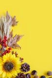 Желтая предпосылка осени Фестиваль сбора осени Стоковые Фотографии RF