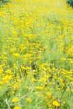 Желтая предпосылка поля цветка Стоковые Фотографии RF