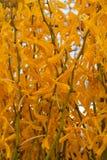Желтая предпосылка свежего цветка орхидеи стоковые изображения rf