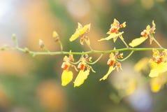 Желтая предпосылка свежего цветка орхидеи Стоковое фото RF