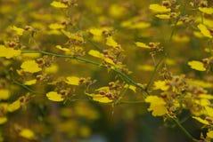 Желтая предпосылка свежего цветка орхидеи Стоковое Изображение RF
