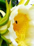 Желтая пчела Стоковое Фото