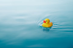Желтая резиновая утка Стоковые Фотографии RF