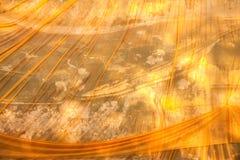 Желтая роба стоковая фотография rf