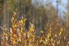 Желтая текстура предпосылки ветви осени Стоковое Изображение RF
