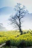 Желтая терраса Стоковое Фото