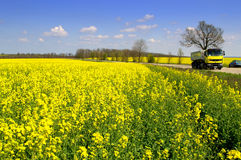Желтая тележка управляя полями весны дороги желтыми Стоковые Изображения RF
