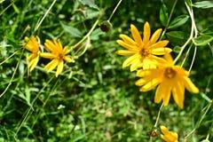 Желтая флора Стоковое Изображение RF
