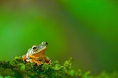 Желтая лягушка в лесе Стоковые Фото