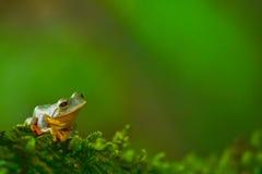 Желтая лягушка в лесе Стоковое фото RF