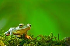 Желтая лягушка на мхе Стоковые Изображения