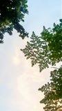 Желтоват-зеленые листья с желт-белым небом стоковые фотографии rf