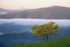 Желтое дерево в горе Стоковое Изображение