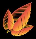 Желтое дерево 3 завяло лист против черной предпосылки Стоковые Фотографии RF