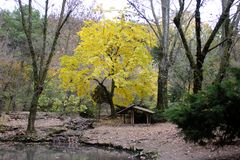Желтое дерево около пруда Стоковые Изображения