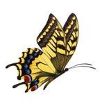 Желтое летание бабочки бесплатная иллюстрация