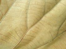 Желтое золото лист стоковое изображение rf