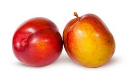2 желтое и красная слива близко Стоковые Изображения