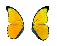 Желтое крыло бабочки изолированное на белой предпосылке Стоковое Изображение RF