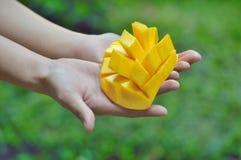 Желтое манго на руках Стоковые Изображения