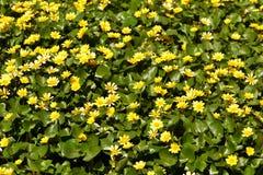 Желтое море Стоковые Изображения
