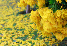 Желтое падение цветков на естественное зеленое поле Стоковое Изображение RF