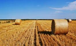 Желтое поле лета с сенами Стоковое фото RF