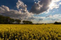 Желтое поле и большие облака на небе стоковое фото rf