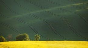Желтое поле рапса и зеленые холмы Стоковое Фото