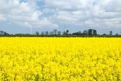 Желтое поле сурепки Стоковое Изображение
