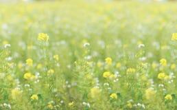 Желтое поле цветка Стоковое Изображение RF