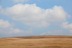 Желтое поле Стоковое Фото