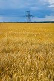 Желтое поле Стоковые Фото