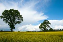 Желтое поле Стоковое Изображение RF