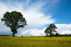 Желтое поле Стоковые Изображения RF