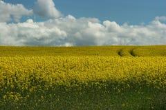 Желтое поле Стоковое Изображение