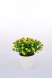 Желтое украшение цветка Стоковое фото RF