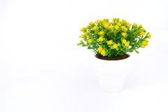 Желтое украшение цветка Стоковые Фото
