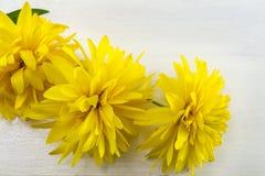 Желтое украшение цветка Стоковые Фотографии RF