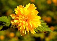 Желтое цветене стоковое фото