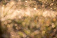 Желтое bokeh от травы, предпосылки, нерезкости Стоковая Фотография