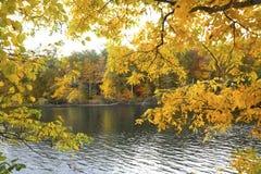 Желтые ветви осени обрамляют реку Farmington, кантон, Co Стоковые Фотографии RF