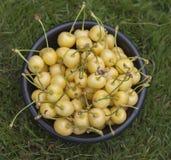 Желтые вишни в черном деревянном шаре Стоковая Фотография