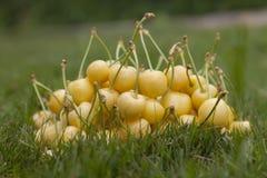 Желтые вишни на траве Стоковые Фото